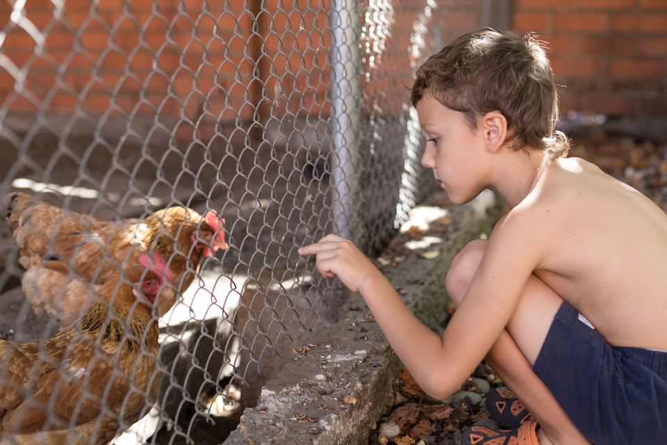 Little boy sitting with farm chickens at the day time